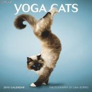 可爱的功夫瑜伽猫